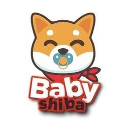 Baby Shiba BHIBA